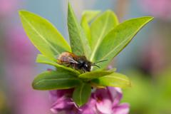 Solitary bee on flower - stock photo