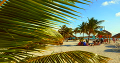 4K Palm Tree Leaf in Breeze, Warm Sunny Day on Sand Beach in Paradise Island Stock Footage