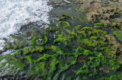 Wave Crashing on Algae Covered Rocks - stock photo