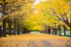 defocus of yellow ginkgo leaves tunnel park in autumn - stock photo
