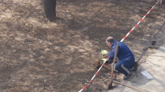 Older male gardener planting rose on the excavated hole, high angle view. Stock Footage