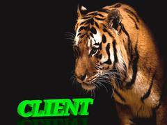 CLIENT  bright green volume letter word, animall pussy tiger on black backgro Stock Illustration
