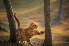 Domestic orange fur cat relaxing in park with beautiful morning ight Stock Photos
