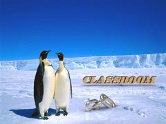 CLASSROOM  Two foolish penguins and big silver chain on driftage ice on north - stock illustration
