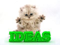 IDEAS  Feathery kitty with feathery raised upwards paws on white background Stock Illustration
