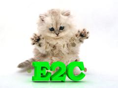 E2C  Feathery kitty with feathery raised upwards paws on white background - stock illustration
