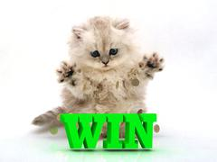 WIN  Feathery kitty with feathery raised upwards paws on white background Stock Illustration