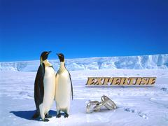 EXPERTISE  Two foolish penguins and big silver chain on driftage ice on north Stock Illustration