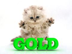 GOLD  Feathery kitty with feathery raised upwards paws on white background.. - stock illustration