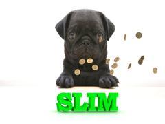 SLIM  Bright word, Blackenning dog sort pug, golden coins on white background Piirros