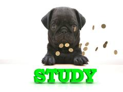 STUDY  Bright word, Blackenning dog sort pug, golden coins on white backgroun Piirros