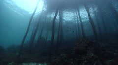 Ocean scenery lots of baitfish under wooden pier, on wharf, HD, UP24144 Stock Footage