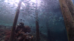 Ocean scenery lots of baitfish under wooden pier, on wharf, HD, UP24166 Stock Footage