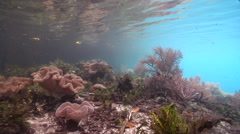 Ocean scenery camera sneaks into shot for a few seconds, shot moves along Stock Footage