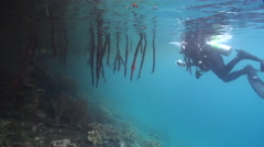 Point and shoot photographer taking images in mangroves with Stilt mangrove in Stock Footage