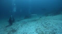 Reef manta ray avoiding bubbles, Manta alfredi, HD, UP24298 Stock Footage