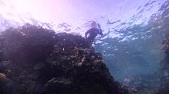 Freediver swimming in lagoon in Australia, HD, UP24546 Stock Footage