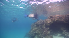 Freedivers swimming in lagoon in Australia, HD, UP24558 Stock Footage