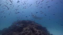 Diver chases critter away cleaning and being cleaned on cleaning station with - stock footage