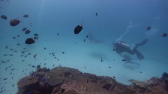 Reef manta ray swimming on cleaning station, Manta alfredi, HD, UP24706 Stock Footage