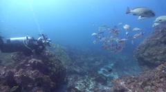 Housed SLR photographer taking images on rocky reef with Blackspot goatfish in Stock Footage