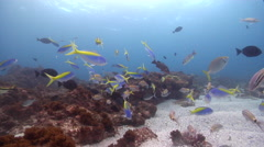 Ocean scenery on rocky reef, HD, UP24863 Stock Footage