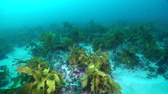 Ocean scenery on rocky reef covered in seaweed and kelp, HD, UP24873 Stock Footage