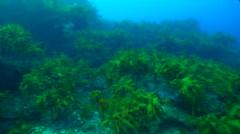 Ocean scenery on rocky reef, HD, UP24965 Stock Footage