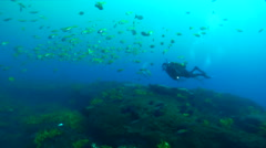 Lone diver swimming on rocky reef covered in seaweed and kelp with Eastern Stock Footage