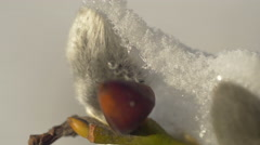 Willow buds covered with snow Stock Footage