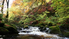 Stream rapids in autumn, Moness Burn, Aberfeldy, Scotland - stock footage