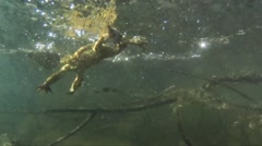 Several toads jump and swim in the water Stock Footage