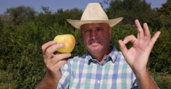Orchard Farmer Man Showing Close Up Best Flavored Sweet Apple Fruit Recommended Stock Footage
