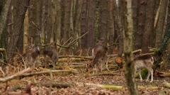 Roe in a forest - stock footage