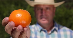 Extreme Closeup View Farmer Recommend Mandarin Fruit Exotic Fresh Sweet Citrus Stock Footage