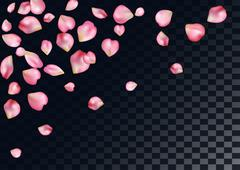 Abstract background with flying pink rose petals. Stock Illustration