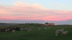 Scenic shot of sheep in field and rural Xhosa hut. - stock footage