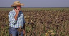 Farmer Man  Business Talking Mobile Phone Sunflower Crop Farmland Inspection Stock Footage