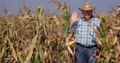 Happy Confident Hello Hand Salute Farmer Man Greetings Maize Culture Farmland Stock Footage