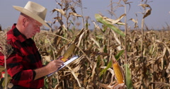 Agriculture Engineer Clipboard Notes Analyze Corn Cob Structure Check Quality Stock Footage