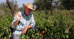 Satisfied Gardner Man Showing Farmland Paprika Crops Good Results Red Peppers Stock Footage