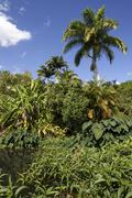 Tropical vegetation with banana and palm trees Reserve Naturelle Nationale - stock photo