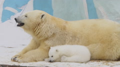 A polar bear family rest in a zoo in a winter Stock Footage