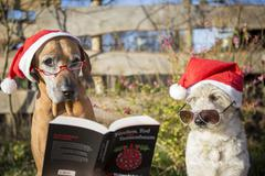 Two dogs canis lupus familiaris with Christmas hats eyeglasses and Christmas - stock photo