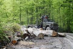 Logging, felling of trees, the lumber industry Stock Photos