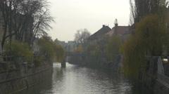 Willow on the bank of Ljubljanica River in Ljubljana Stock Footage