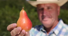 Extreme Closeup Farmer Presenting Pear Fruit Bio Dessert Farm Best Quality Food - stock footage