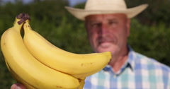 Extreme Closeup Banana Fruit Farmer Recommend Bio Dessert Farm Best Quality Food Stock Footage