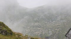Flock of Sheep on Rocky Slope. - stock footage