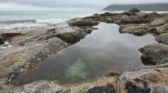 Lofoten Sea Coast and Pool with Alga, Norway. Stock Footage